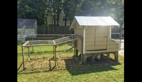 Kure Beach Council Says Chickens Permitted In Town