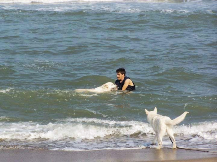 Town Enforcing Rules Governing Dogs On The Beach
