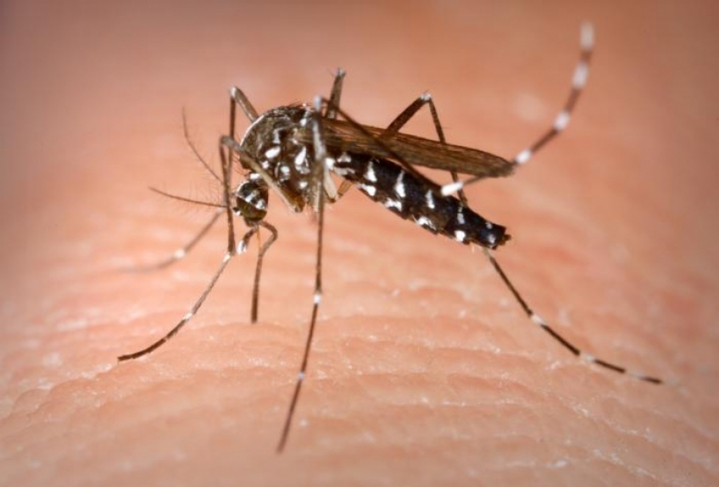 "Mosquito Season Is Here; County Urges  Residents To ""Fight the Bite"" Together"