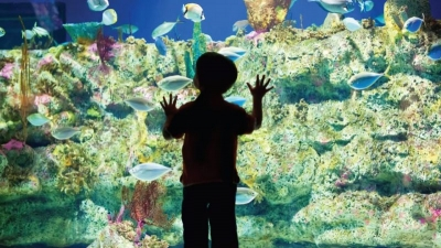 KIDS-ONLY Valentine's Sleepover at the Ft Fisher Aquarium